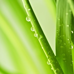 Grean Leaves with Water Drops