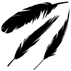 Vector feathers in grunge style