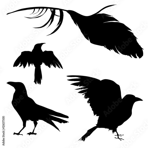 Halloween Ravens And Crows