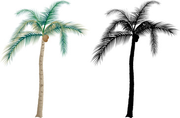 Tropical palm trees - vector illustration