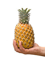Presenting ripe pineapple