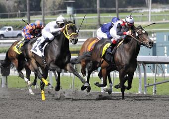 Four Horses Across