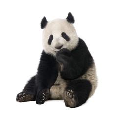 Fotobehang Panda Giant Panda (18 months) - Ailuropoda melanoleuca