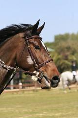 pferd - turnier