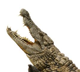 Türaufkleber Crocodile Alligator freigestellt