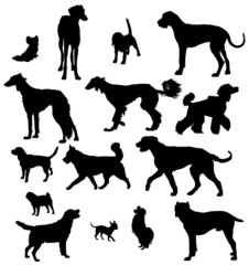Vector dog collection