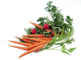 Carrot & radish
