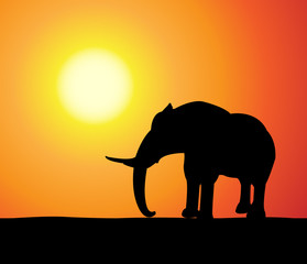 elefant at sunset