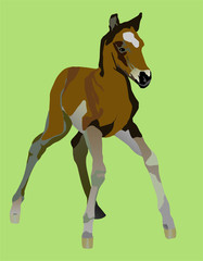 clumsy little a foal yet can not be on the long feet