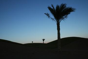 palmtree silhouettes
