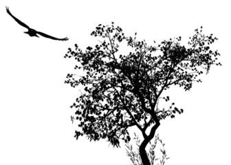 L'aigle et l'arbre