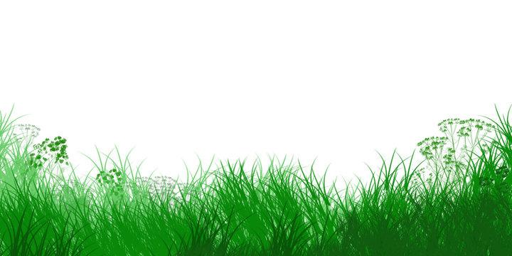 Bandeau horizontal herbes vertes sur fond blanc