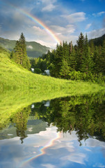Wall Mural - Rainbow over forest