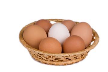 eggs of the hen