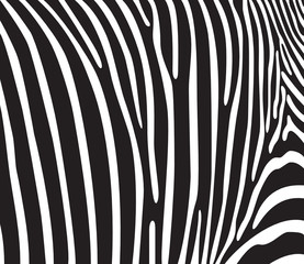 Zebra texture Black and White. Vector illustration.