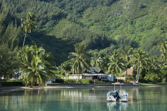 Coast of Tropical Island
