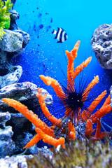 Papiers peints Sous-marin underwater life