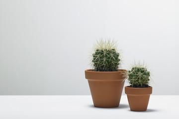 kaktus03