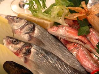pesce fresco close up 2