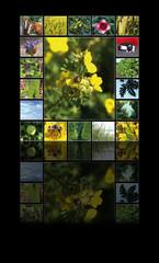 Fotocollage Natur