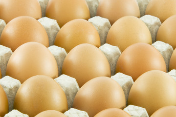 Many fresh rural eggs packed in cardboard container