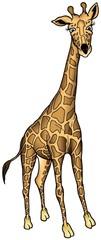 Giraffe from Africa - colored cartoon illustration