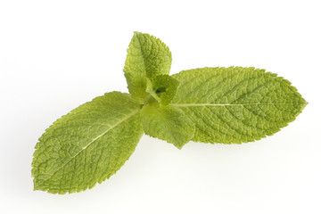 Fresh mint on withe