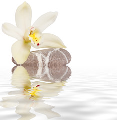 orchidea riflessa