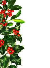 .Christmas border, holly with red berries, isolated on white