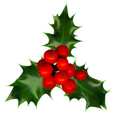 Clipping path. a sprig of holly isolated on a white