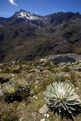 Randonnée de haute montagne vers le Pico Bolivar