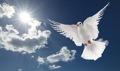 Wall Mural - white dove