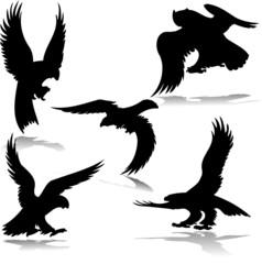 eagles illustartion vector silhouettes