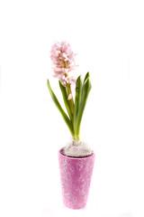 hyaciunth