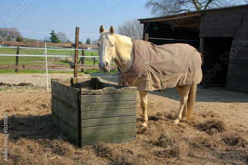 Pferd im paddock vor heuraufe stockfotos und lizenzfreie for Boden heuraufe pferd