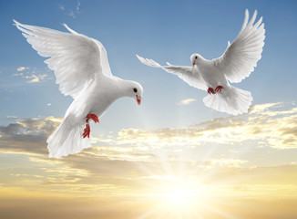 Wall Mural - two dove