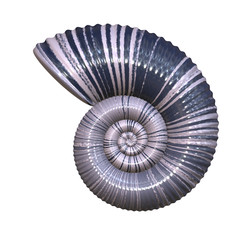 An illustration of a high detailed sea shell