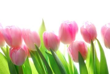 Poster de jardin Macro pink tulips