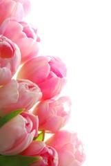 In de dag Macro pink tulips