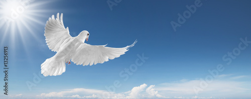 Wall mural white dove in the sky