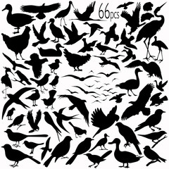 66 pieces of vectoral bird silhouettes.
