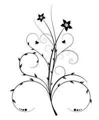 flower isolate on white