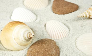 muscheln und steine im sand