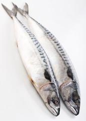 .mackerel on white background