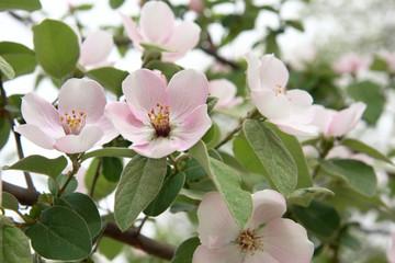 springtimes blossom