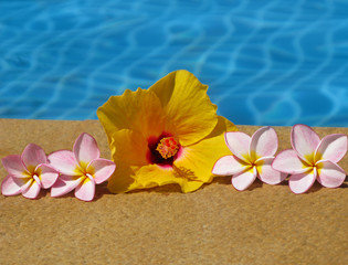 flowers and swimming pool
