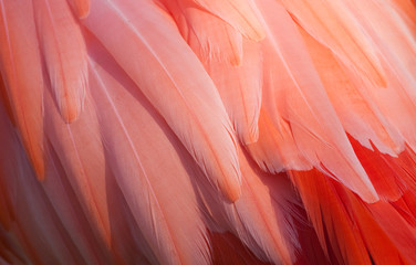 The Detail Of Flamingo