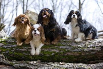 quatre chiens ensemble grimpés sur un tronc d'arbre couché