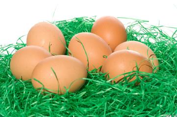 eggs in green grass