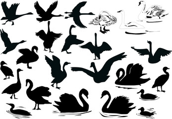 swimming birds silhouettes